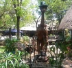 Thumbnail for: Victoria Falls Backpackers Lodge
