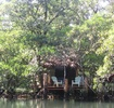 Thumbnail for: The Mangrove Garden